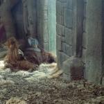 orangutanghanen